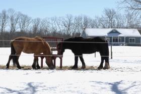 【圖博】春雪後的長島北福克North Fork