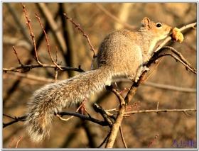 六只眼:贪吃的小松鼠