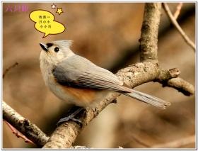 六只眼:我是一只小小小小鸟