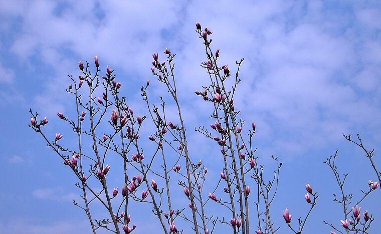 【原创新稿】春光乍泄(春天的神话组诗之五) - 畅之 - 智凯书屋