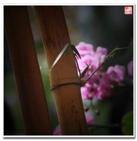 【心想事成】蘭花花语