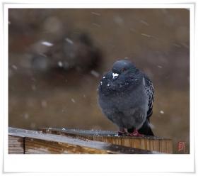 【风之影】风雪中