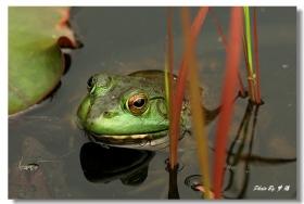 〖梦游摄影〗蛙10P
