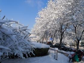 北京,早春二月大雪来,30年罕