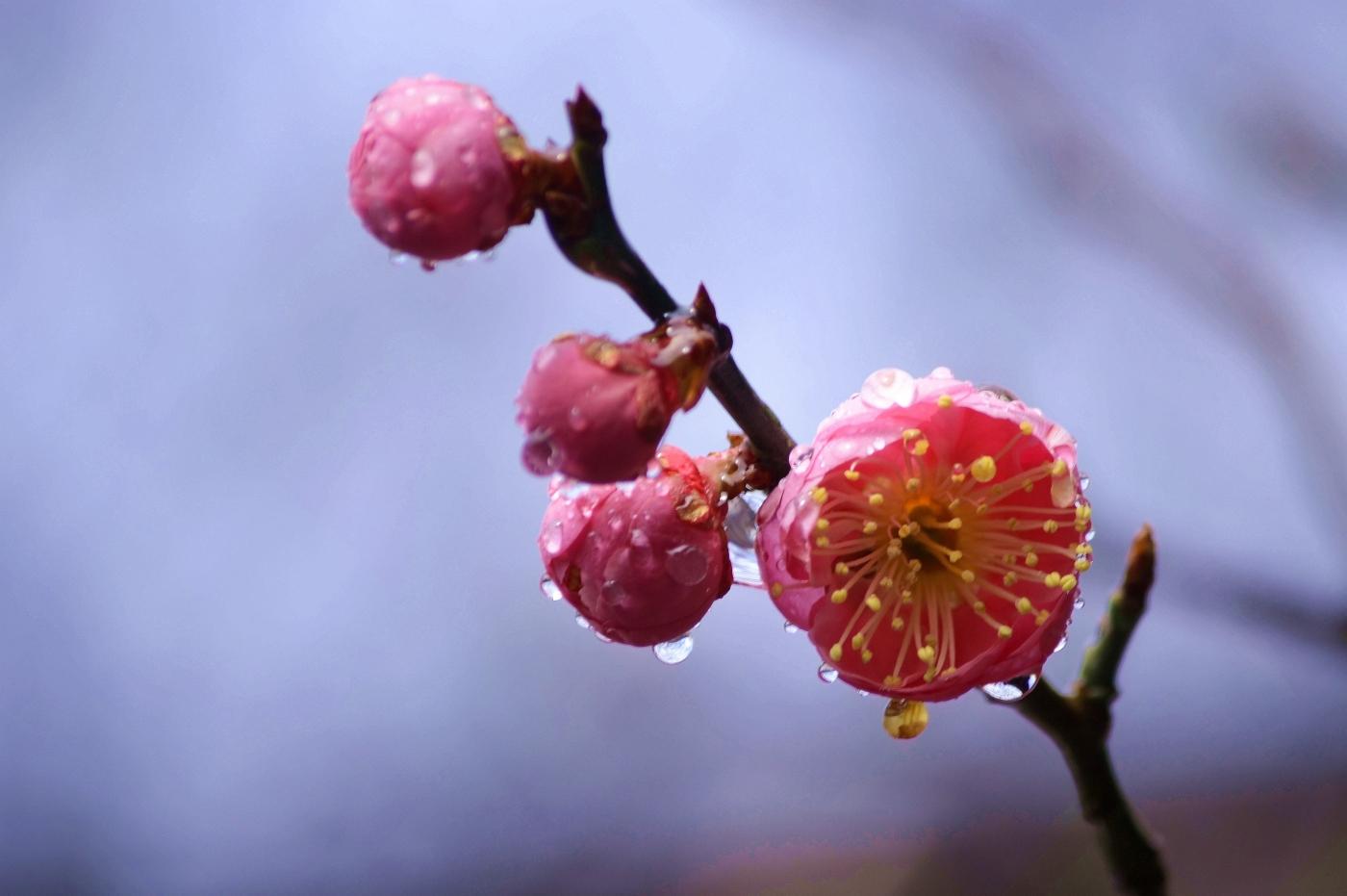 2013年03月21日 - 畅之 - 智凯书屋