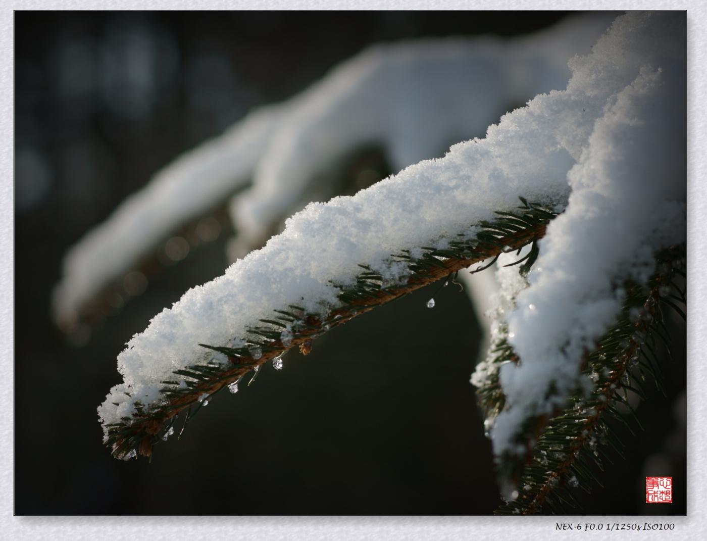 【心想事成】風雪随拍之二_图1-6