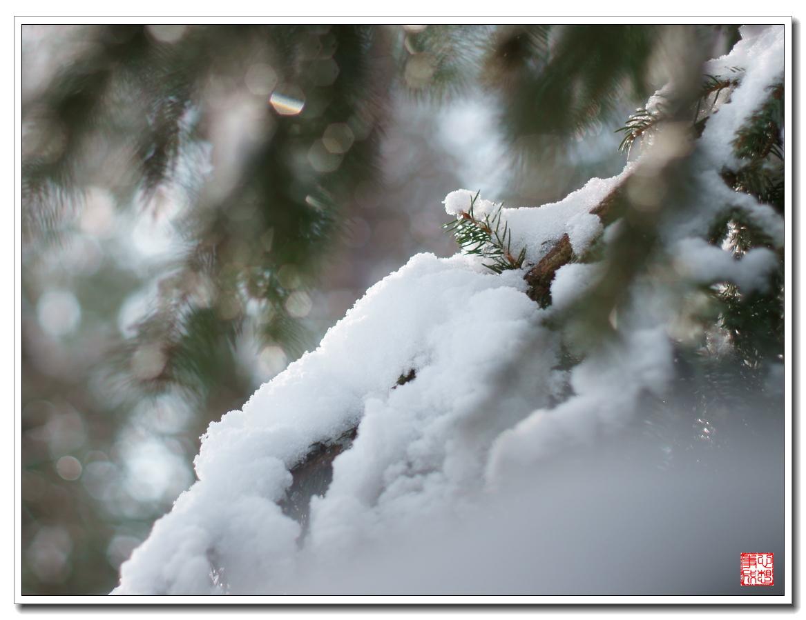 【心想事成】風雪随拍之二_图1-5