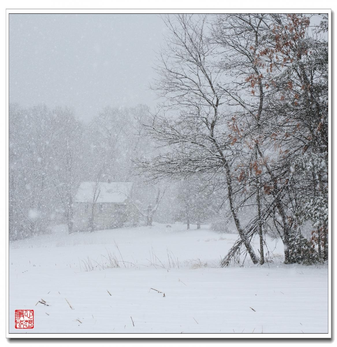 【心想事成】風雪随拍之二_图1-4