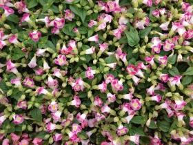 春天里那些小小的花朵【原创】