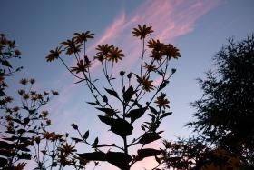 后花园的风景---夕阳残照