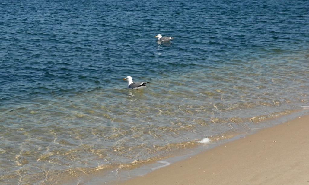 【圖】當整個沙灘屬於自己的時,誰又會顧得了寒冷?_图1-3