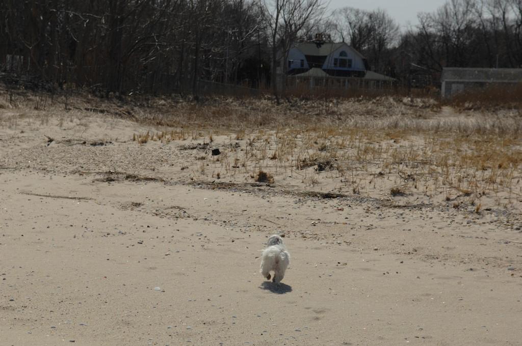 【圖】當整個沙灘屬於自己的時,誰又會顧得了寒冷?_图1-8