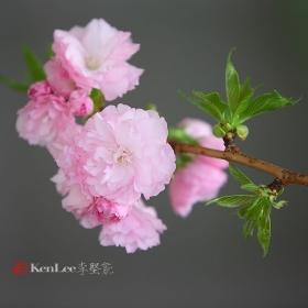 [Ken Lee] 在桃花绽放的地方