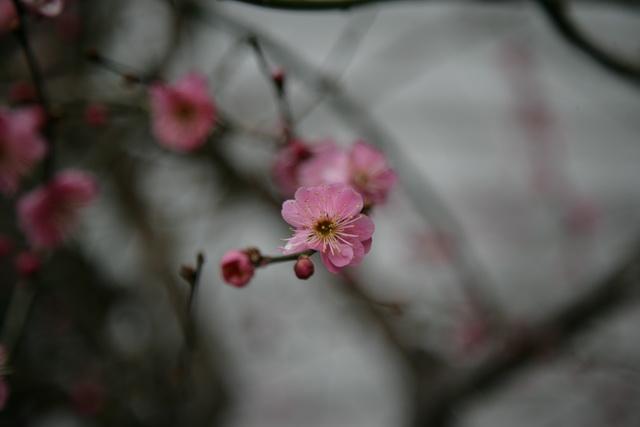 春日赏梅_图1-3