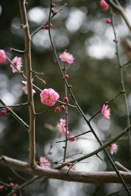 春日赏梅_图1-6