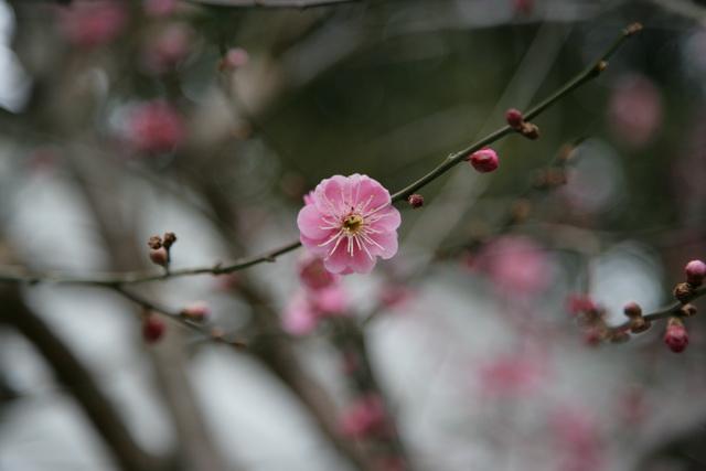 春日赏梅_图1-7