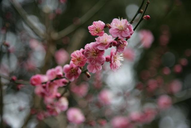 春日赏梅_图1-10