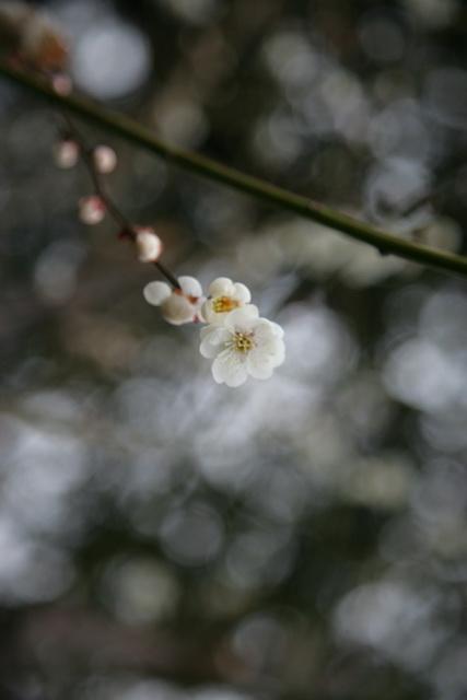 春日赏梅_图1-18