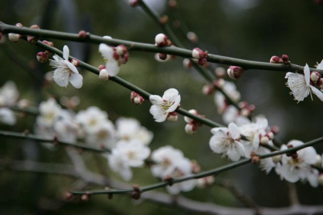 春日赏梅_图1-23