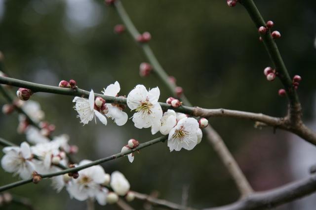 春日赏梅_图1-24