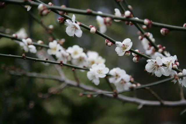 春日赏梅_图1-26
