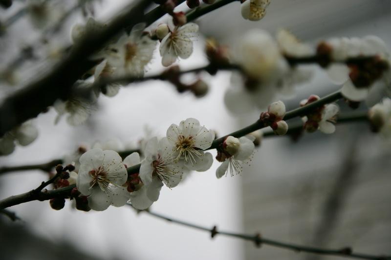 咏梅_图1-9