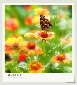 【花.蝴蝶】
