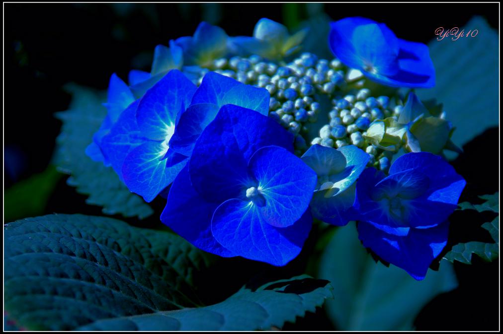 【原創】那些花兒(攝影)_图1-9