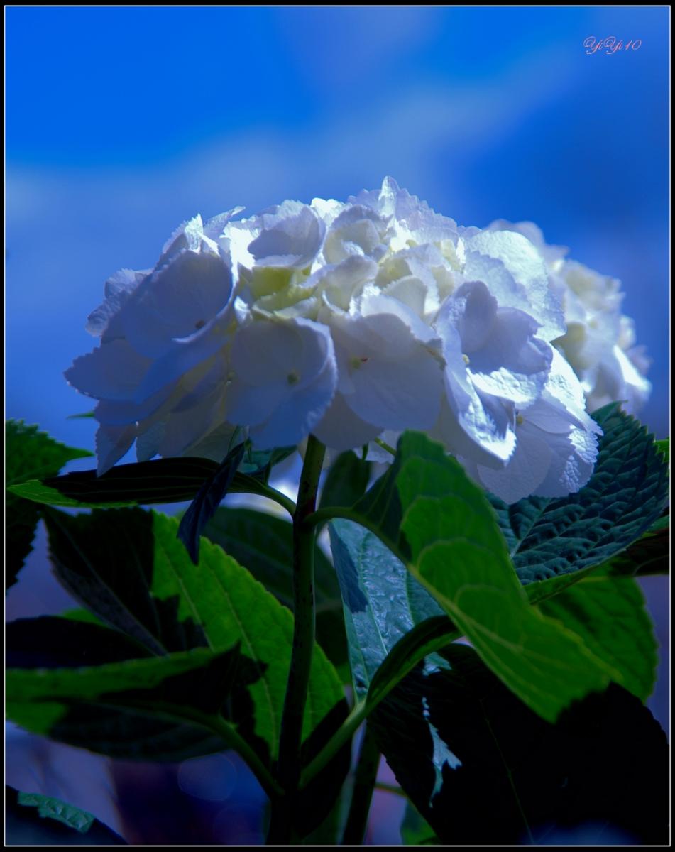 【原創】那些花兒(攝影)_图1-8