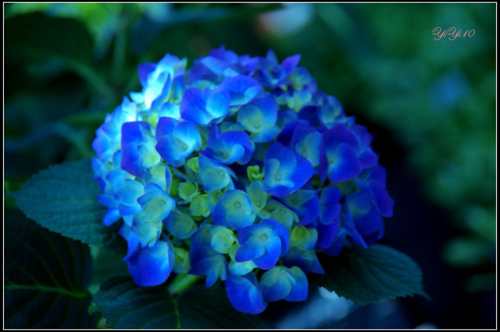 【原創】那些花兒(攝影)_图1-2
