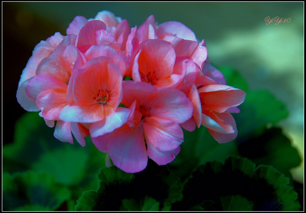 【原創】那些花兒(攝影)_图1-3