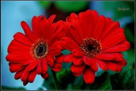 【原創】那些花兒(攝影)