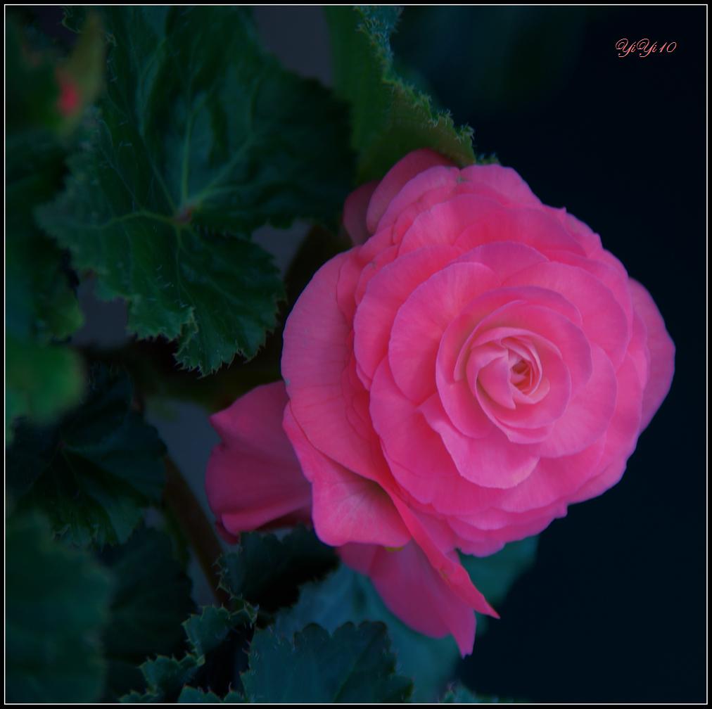 【原創】那些花兒(攝影)_图1-5