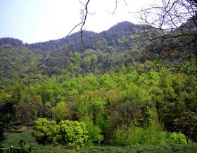 茶乡的山水新绿