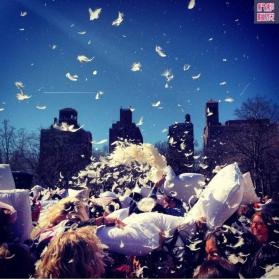 亲历2013年度纽约枕头大战实录