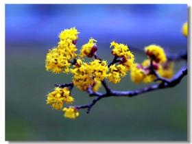 春风送暖小花盛开