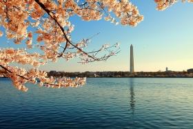 华盛顿DC樱花