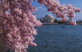 2013华盛顿樱花之游-1