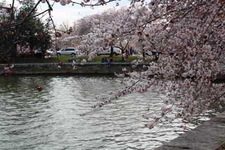 遇见樱花季_图1-8