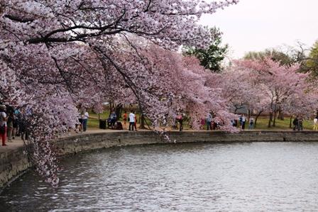遇见樱花季_图1-19