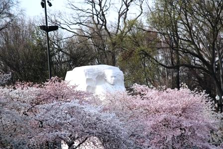 遇见樱花季_图1-20