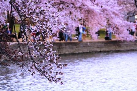 遇见樱花季_图1-23