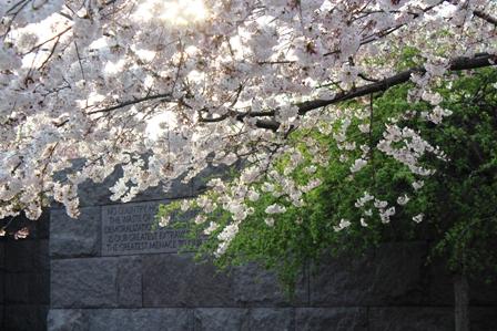遇见樱花季_图1-34