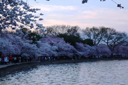 遇见樱花季_图1-40