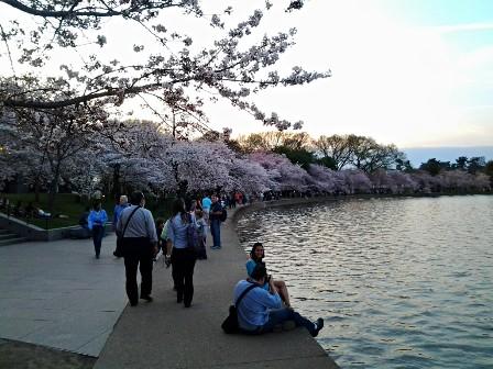 遇见樱花季_图1-28