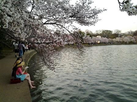 遇见樱花季_图1-24