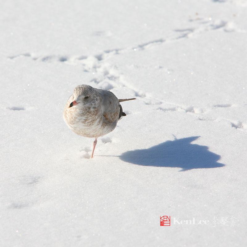 [Ken Lee] 悠闲的心境享受悠闲的阳光_图1-4