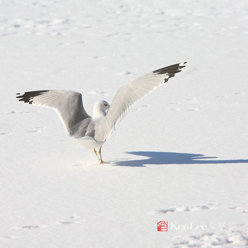 [Ken Lee] 悠闲的心境享受悠闲的阳光_图1-10