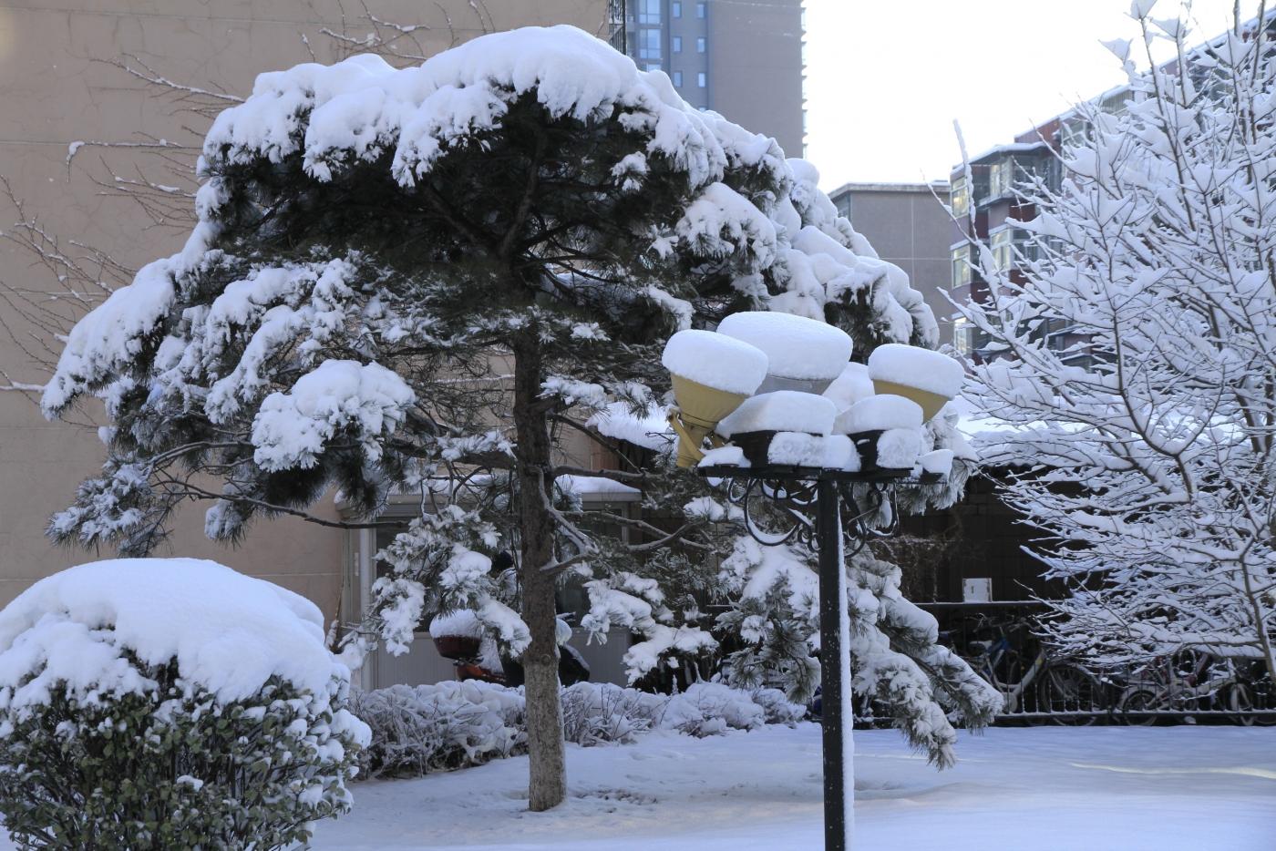 春天的雪_图1-4