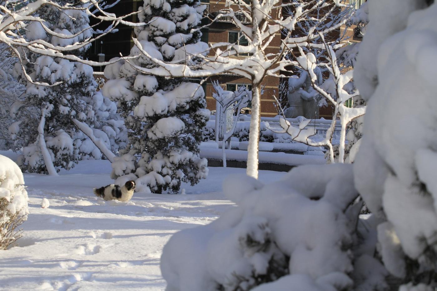 春天的雪_图1-11
